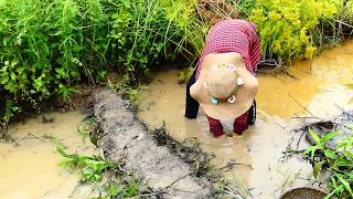Chitol fish Farm | 7/8 inches Chitol fish Catching and packing