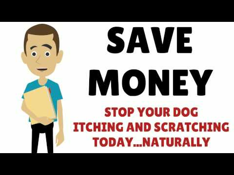 Stop Itchy Dog Scratching Using Natural Treatment and Holistic Therapy