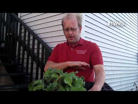 5 Ways to Remove Aphids from Plants - Quick Tip