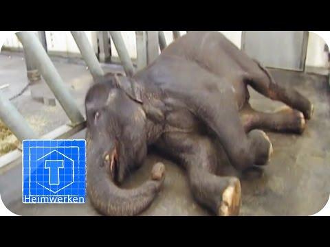 Alltag beim Zoo-Tierarzt | ToolTown