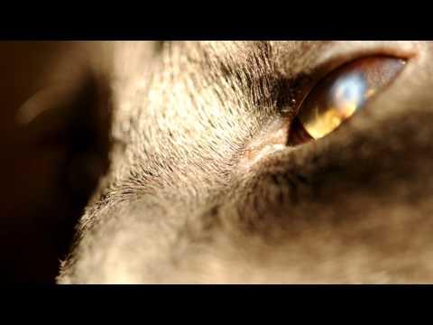 dSLR Video - Macro of Cat