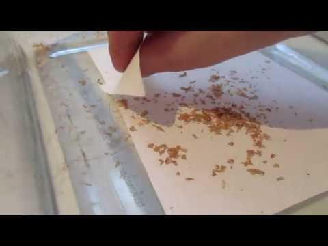 Mites in mealworms? A simple hack to recover worms.