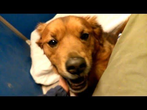 7 Pima Animal Care Center on 2-12-18 Adoptable