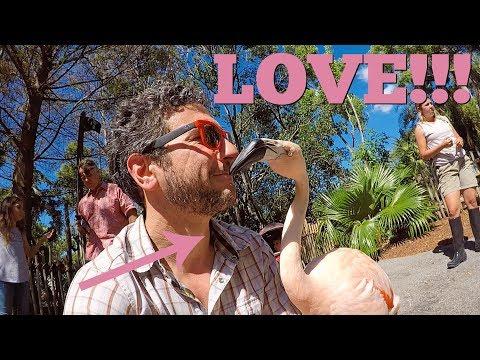 LOVE AFFAIR WITH A FLAMINGO AT THE PALM BEACH ZOO!