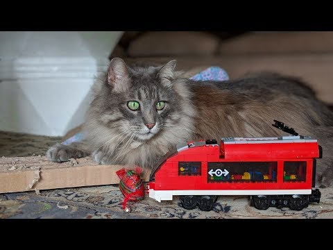 Lego trains and a Kitty
