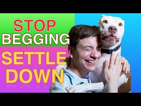 How to Teach your Dog to STOP BEGGING & SETTLE DOWN Right now!