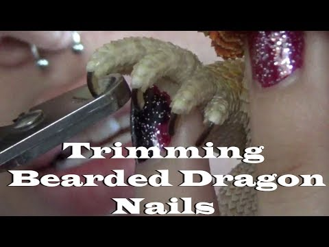 How To Cut Your Bearded Dragons Nails