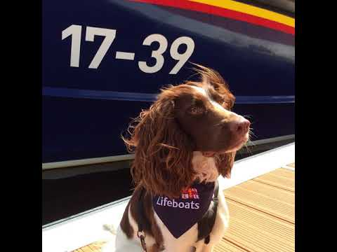 Lifeboat Dogs