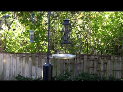 Ultimate Bird Feed Catcher   Broadband