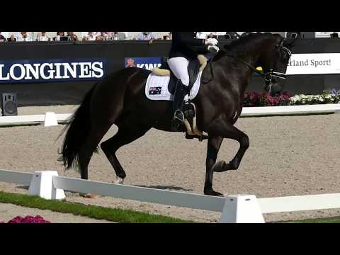 Xxx Mp4 Feodoro At CH M D YH Final For 6 Year Old Horses 3gp Sex
