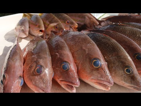 Catch Clean Cook- Multi SPECIES Snapper Fishing- Mangrove & Yellowtail Snapper Dinner!