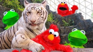 Kermit the Frog and Elmo play Hide and Seek at the Zoo!