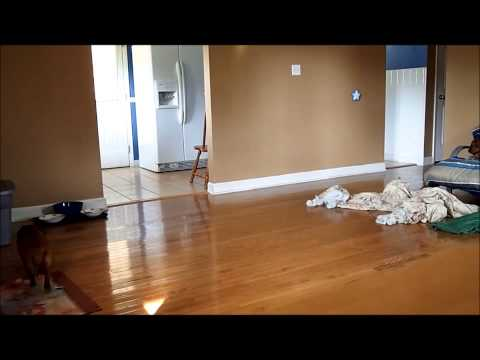 Dogs Home Alone