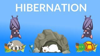 Hibernation of Animals | Why do Animals Hibernate | Hibernating Animals for kids