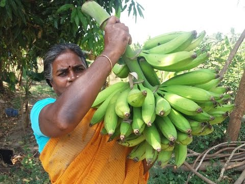 Fresh Banana Chips Cooking in Our Village Farm - My Village Food