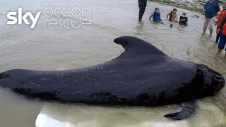 Whale dies after swallowing 80 plastic bags