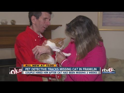 Family hires pet detective to find missing cat