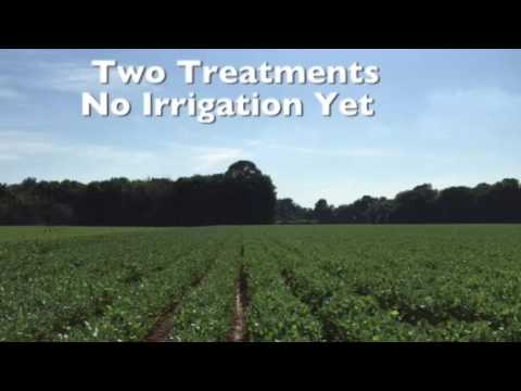 Energy On Ag How to increase soybean and Cotton production