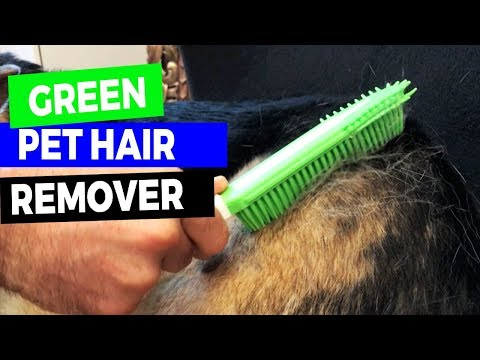 Easy Way to Get Rid of Pet Hair - from Furniture, Car, Bedding, Carpet