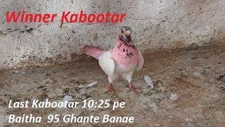 13 minutes) Patti Kabootar Video - PlayKindle org