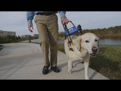 The Making of a Superhero (Southeastern Guide Dogs)