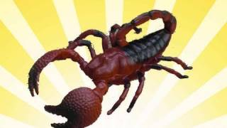 Download Giant Scorpion Video