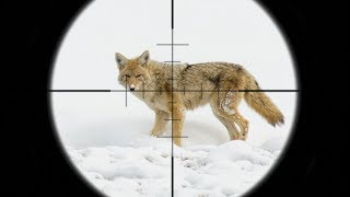 Download EPIC Coyote Hunting in the SNOW!!! (SCOPE CAM) Video