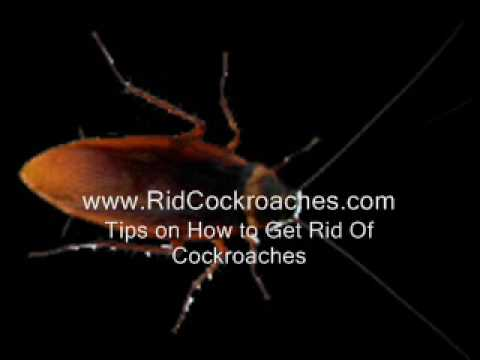 Tips on How To Get Rid Of Cockroaches