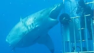 5 Megalodon Caught on Camera & Spotted In Real Life! #3
