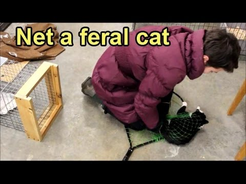 Net a feral cat and treat it for parasites