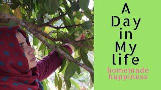 A Day In my life- പൊതിച്ചോറ് സ്പെഷ്യൽ(ചാമ്പക്ക ചമ്മന്തി/തേങ്ങാ-തക്കാളി ചട്ട്ണി/വെണ്ടക്ക ഫ്രൈ )