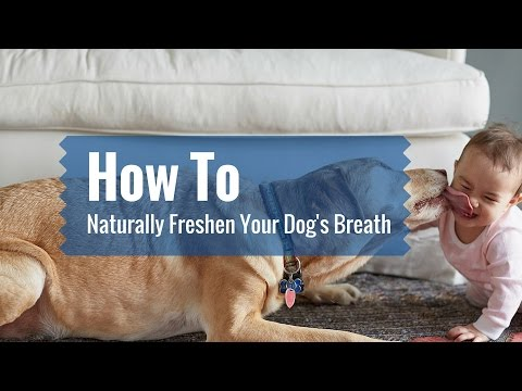 How to Naturally Freshen Your Dogs Breath