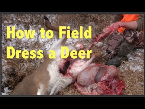 How To Field Dress A Whitetail Deer Step By Step