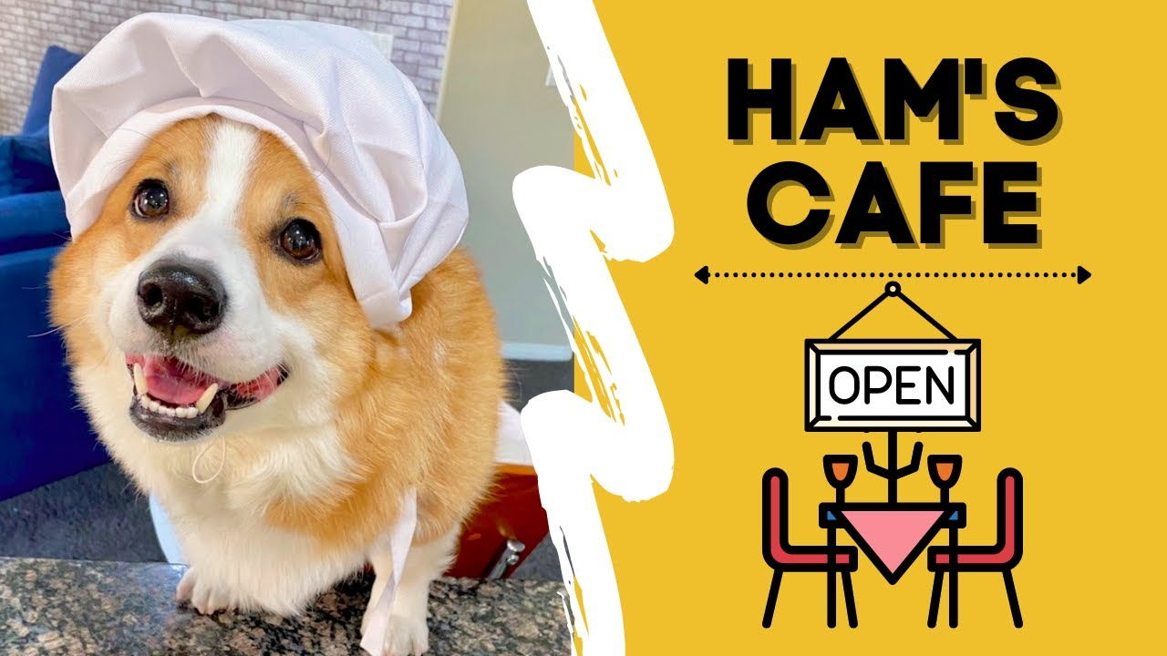 Corgi Opens Restaurant Business and Becomes A Celebrity Chef! | Hammy and Olivia