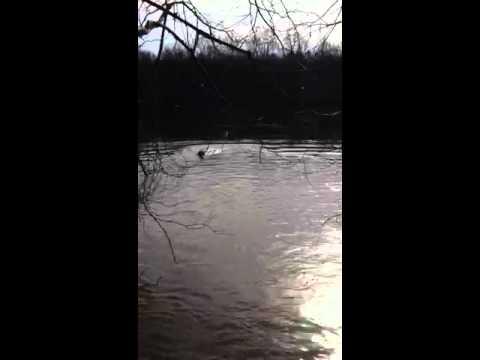 Hershey swimming