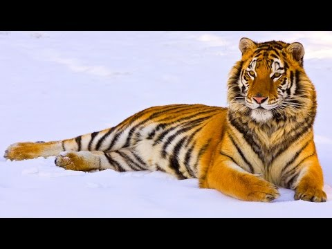 10 Animals Saved From Extinction