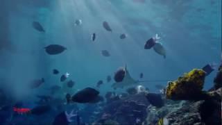 "Mako Mermaids ""Sirenas de Mako"" - Capítulo 1 (Expulsadas) - Temporada 1 - Audio Latino. [HD]"