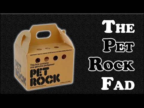 The Pet Rock Fad - As Crazy as It Sounds?