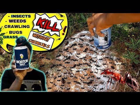 HOW-TO.... FOOD  SALT KILLS ANTS, CRAWLING BUGS, WEED, GRASS....NO CHEMICALS !!!