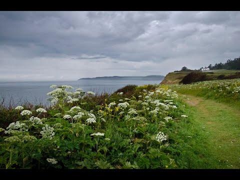 Twelve Months at Admiralty Head, Whidbey Island, WA