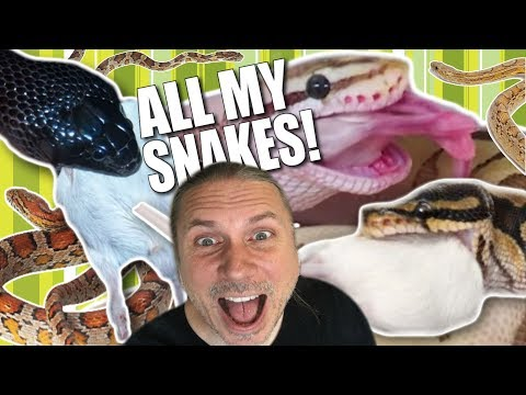 FEEDING ALL MY SNAKES IN ONE VIDEO!! | BRIAN BARCZYK