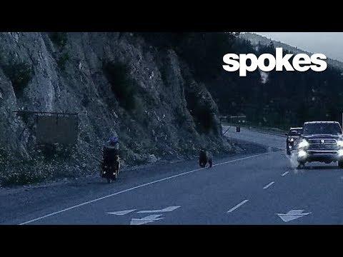 spokes :: episode 6 :: spokey the bear