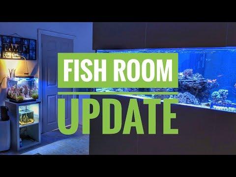Live Fish Room Update FAIL