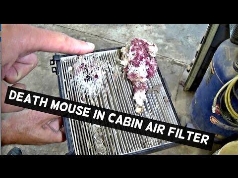 DEAD MOUSE IN CABIN AIR FILTER  HYUNDAI SONATA CABIN AIR FILTER