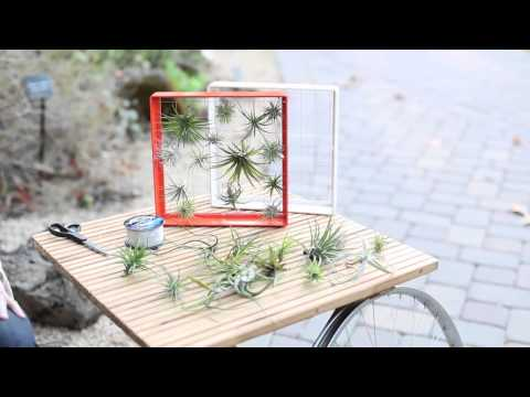 Designing with Airplants | Sunset
