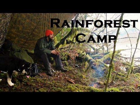 Rainforest Basecamp