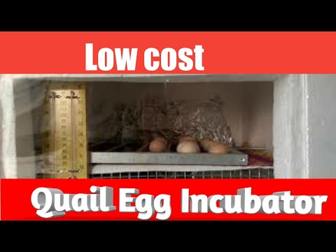 Home made Quail Egg incubator ( Mangal Agro Farm) (INDIA)