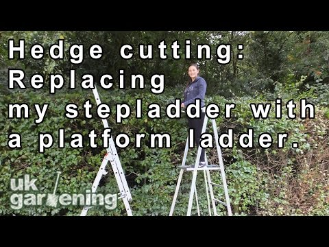 Hedge cutting: Replacing my stepladder with a platform ladder