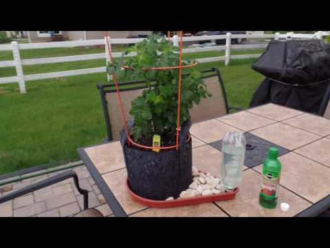 Amazing ITSY BITSY PLANTER! Worlds First Personal Self Watering Grow Bag Garden System!