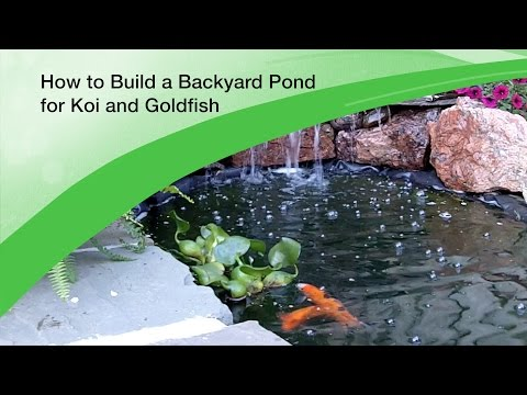 How to Build a Backyard Pond for Koi and Goldfish - Design and Excavation
